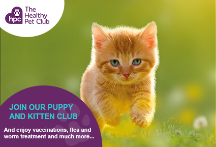 Join The Healthy Pet Club kittens club today
